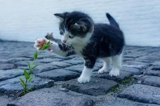 Quels sont les avantages d'une assurance chat ?