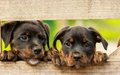 Assurance animaux avis : Faut-il assurer votre animal ? On vous explique tout